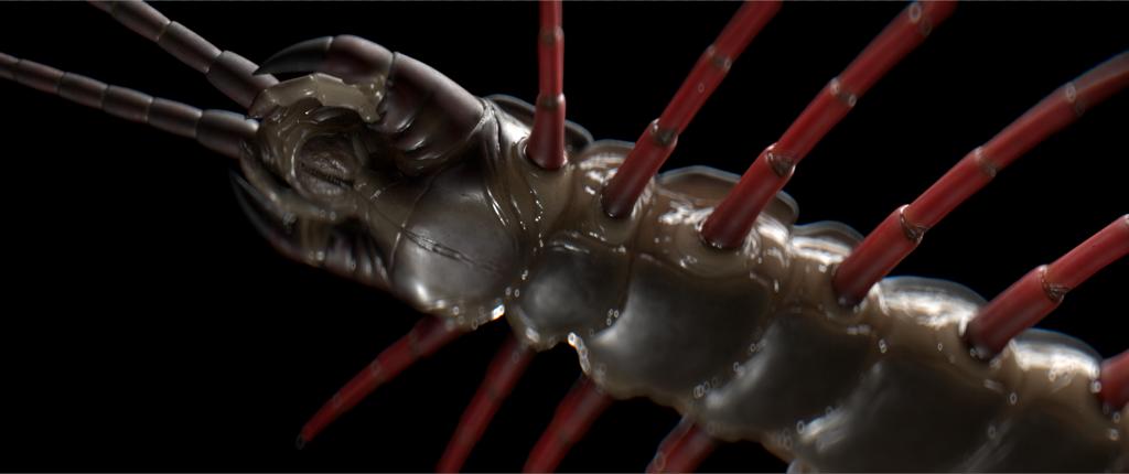 Centipede - head shot
